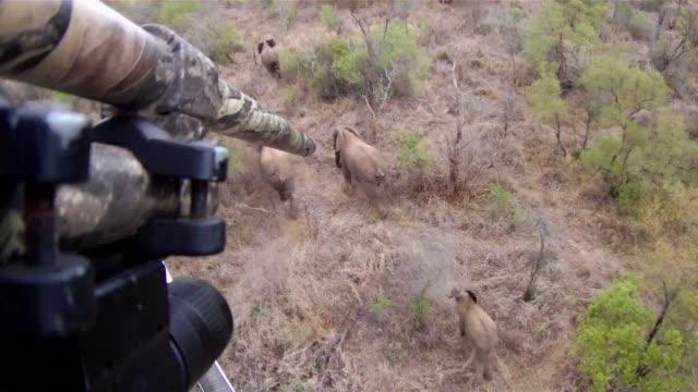 la sobrepoblacion de elefantes en sudafrica amenaza el equilibrio medioambiental debido a su apetito voraz - provinz mpumalanga stock-videos und b-roll-filmmaterial