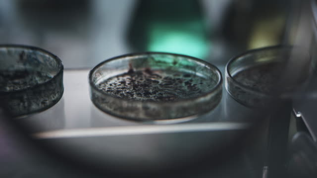 lab samples in petri dish close up. science laboratory. - piastra petri video stock e b–roll