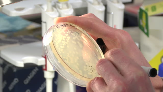 a lab technician writes on a petri dish with a marker pen. - bacterium stock videos & royalty-free footage