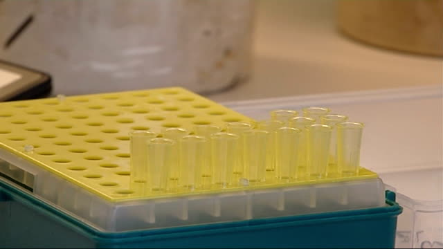 lab technicians carrying out dna analysis various shots of female lab worker carrying out dna analysis work using pipette to transfer samples to pcr... - genetic variation stock videos & royalty-free footage