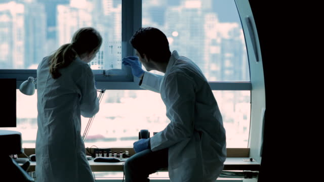 cu pan lab technicians discussing dna gels at cancer research  healthcare medicine industry dna sequencing laboratory / vancouver, bc, canada    - research stock-videos und b-roll-filmmaterial