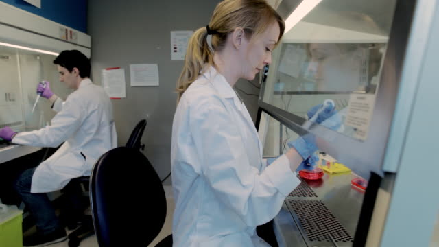 ms pan lab technicians using micro-pipette in fume hood at cancer research healthcare medicine industry  dna sequencing laboratory / vancouver, bc, canada    - campione medico video stock e b–roll