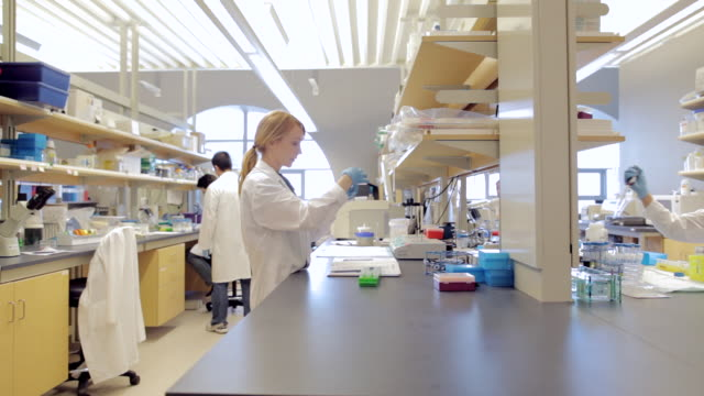 ms pan lab technicians working in laboratory cancer research healthcare medicine industry dna sequencing laboratory / vancouver, bc, canada    - laboratory stock-videos und b-roll-filmmaterial