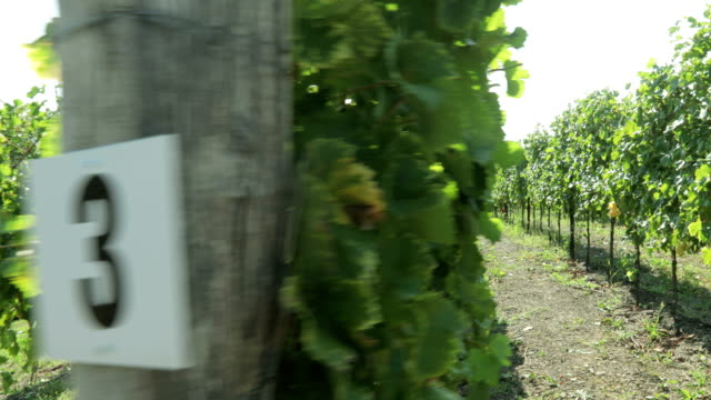 Labeled Vineyard Rows With Numbers