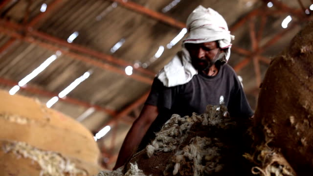 labor in wool storehouse - working animals stock videos & royalty-free footage
