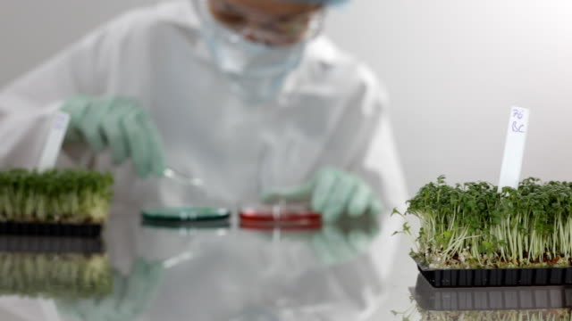 laboratory: researcher behind cress, working at scientific experiment with food - botany stock videos & royalty-free footage