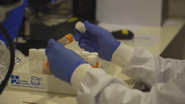 laboratory tests - medical research stock videos & royalty-free footage