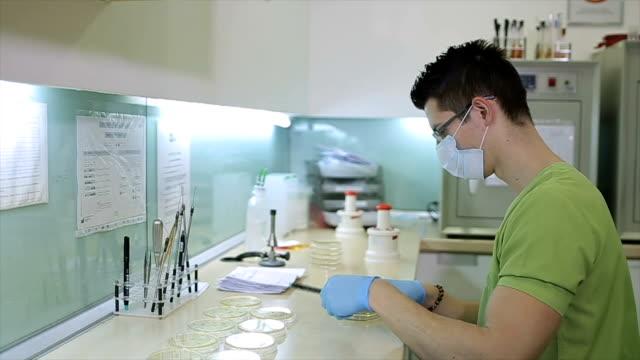 lavoro di laboratorio, microbiologia - escherichia coli video stock e b–roll