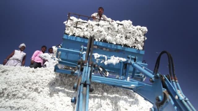 laborers process and move piles of cotton in rajkot, gujarat, india on december 15, 2015. shots shot of many workers passing by piles of cotton while... - cultivated land stock videos & royalty-free footage