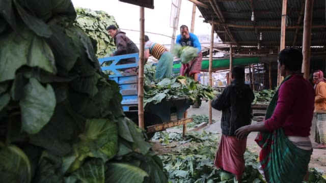 vídeos de stock e filmes b-roll de laborers unloading vegetable in a market during cold wave in dhaka bangladesh on january 08 2018 the cold wave continues to disrupt life across the... - trabalhador rural