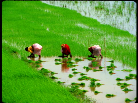 Laborers work in a flooded field.