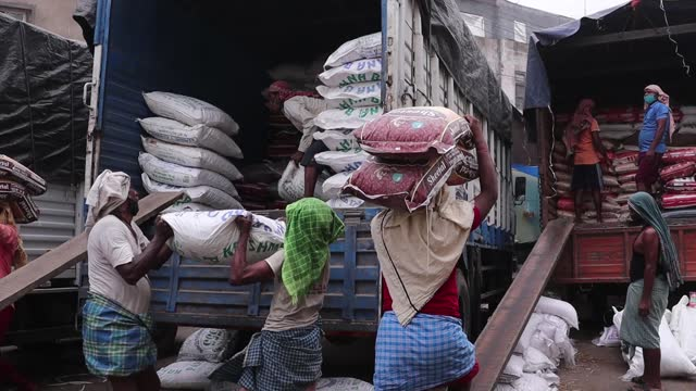 labourers load a sack containing grains in a truck, during the second wave of coronavirus pandemic, on may 01, 2021 in guwahati, india. may 1 is the... - cereal plant stock videos & royalty-free footage