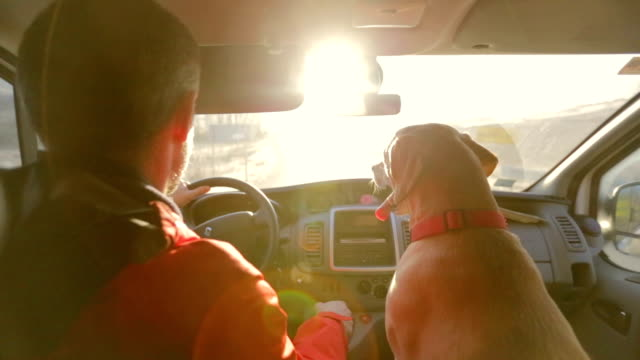 labrador at the road from the passenger seat - pets stock videos & royalty-free footage