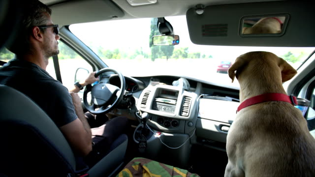 Labrador on passenger seat with his owner