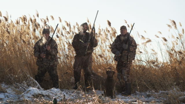 vidéos et rushes de labrador retriever fetches a dead duck from an icy pond after it is shot by hunters - chasser