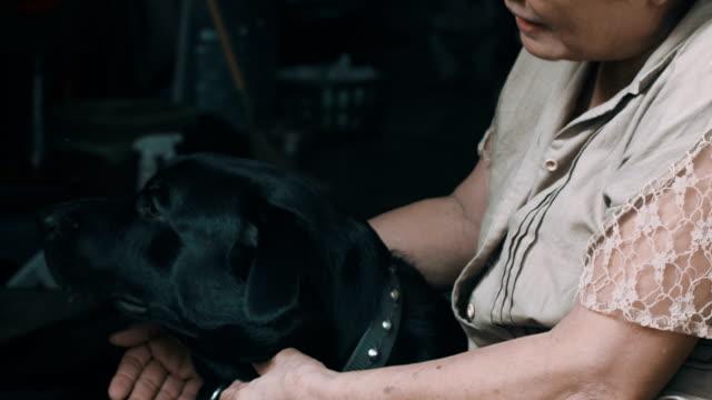 labrador mit asiatische senior women - streicheln stock-videos und b-roll-filmmaterial