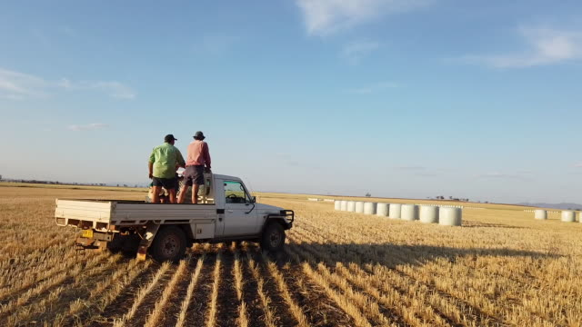 lack of rain has forced wheat farmers in the gunnedah region to turn their failed into hay which they are selling to cattle and sheep farmers... - crop stock videos & royalty-free footage