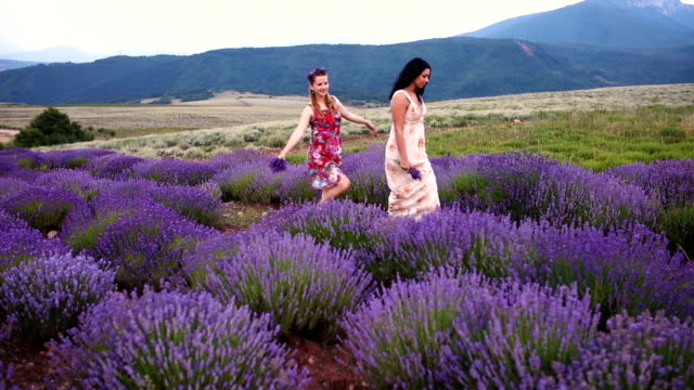 ladies in lavender - bridesmaid stock videos and b-roll footage