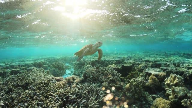 lady elliot island - island stock videos & royalty-free footage