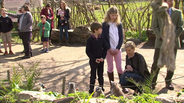 lady louise windsor sophie countess of wessex and james viscount severn joined prince edward earl of wessex on a trip to he wild place project at... - lady louise windsor stock videos and b-roll footage