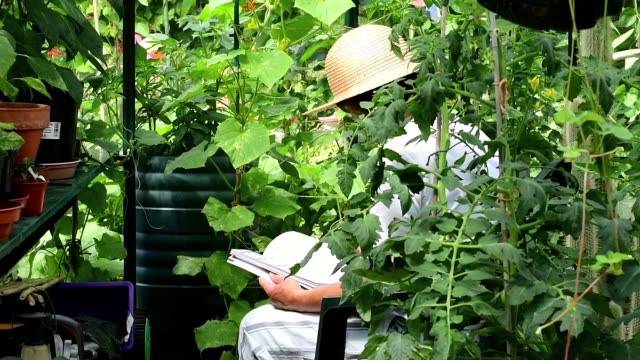 lady read a garden book in the greenhouse - bare tree stock videos & royalty-free footage