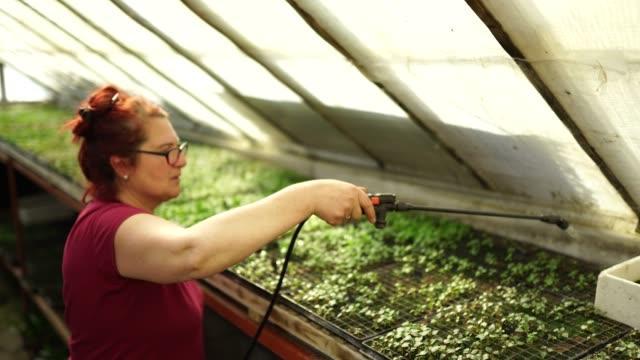 lady spraying plants in flower farm - redhead stock videos & royalty-free footage