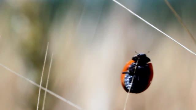 ladybug fly