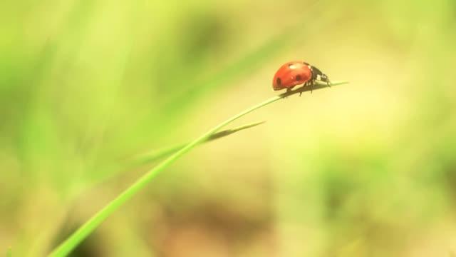 vídeos y material grabado en eventos de stock de ladybug flying away - mariquita