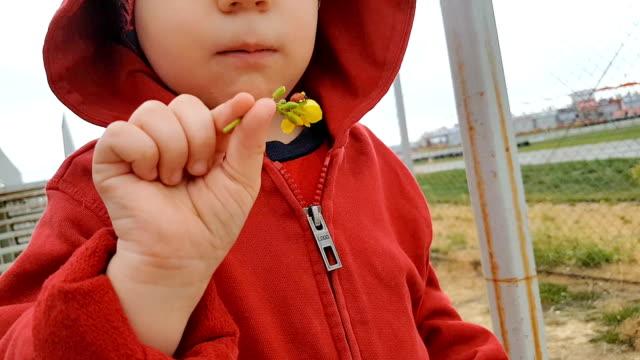 Ladybug on baby's hand