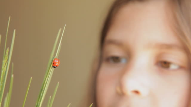vidéos et rushes de cu ladybug walking on grass while girl watching in background / flagstaff, arizona, usa - coccinelle
