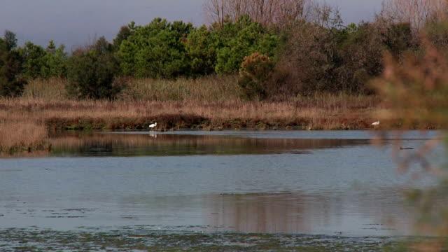 lagoon 02 - backwater stock videos & royalty-free footage