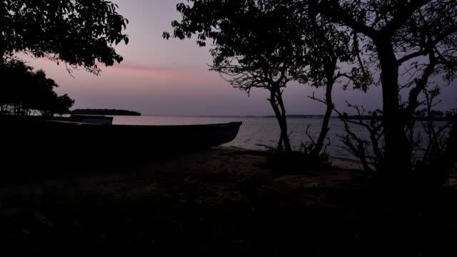 lagoon aerial footage - mangrove tree stock videos & royalty-free footage
