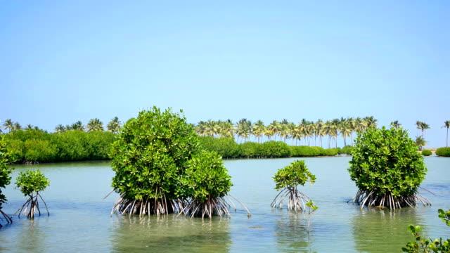 lagoon aerial footage - sri lanka stock videos & royalty-free footage
