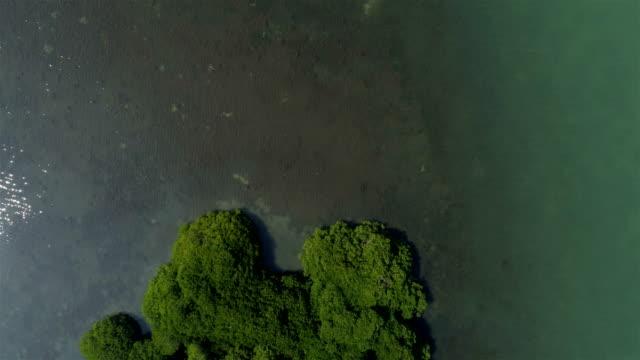 lagoon aerial footage - sri lanka video stock e b–roll
