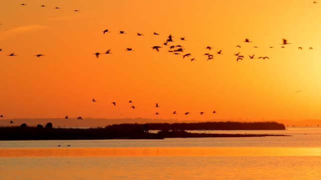 Lagoon area (Bodden) at sunrise with crane migration in autumn, Bresewitz, Zingst, Fischland-Darß-Zingst, Baltic sea, Mecklenburg-Vorpommern, Germany