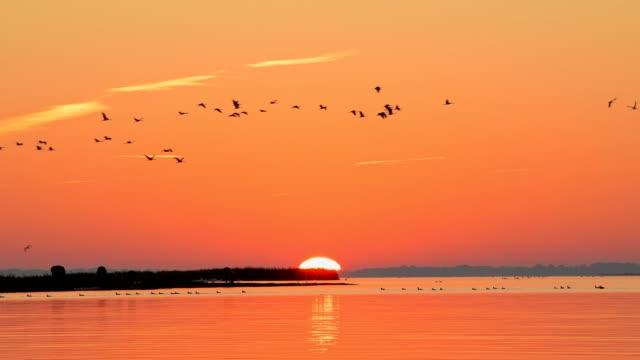 lagoon area (bodden) at sunrise with crane migration in autumn, bresewitz, zingst, fischland-darß-zingst, baltic sea, mecklenburg-vorpommern, germany - ostsee stock-videos und b-roll-filmmaterial