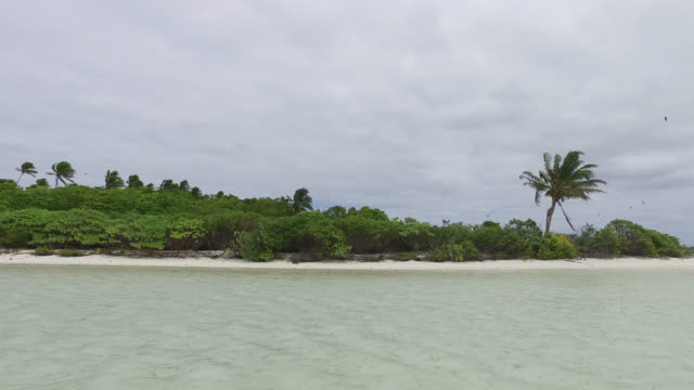 lagoon in front of an island with tropical vegetation - tahitian culture stock videos and b-roll footage
