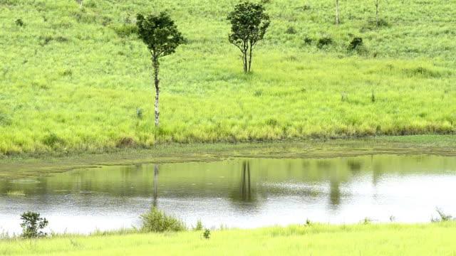 vídeos de stock e filmes b-roll de lagoons - movimento perpétuo
