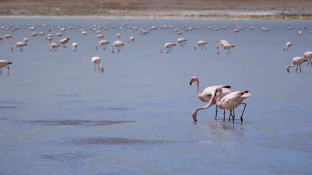 Laguna Colorado with flamingos