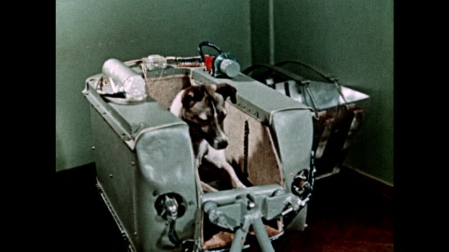 vídeos de stock e filmes b-roll de laika the dog is launched in the sputnik 2 spacecraft - one animal