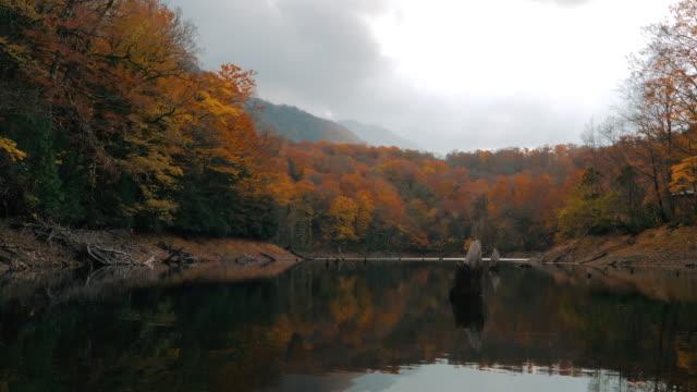 ws lake and forest in autumn, shirakami-sanchi, tsugaru quasi-national park, aomori prefecture, japan - aomori prefecture stock videos & royalty-free footage