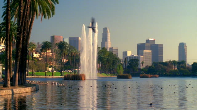 ws, lake and fountain in echo park, skyline of downtown los angeles in background, california, usa - anatra uccello acquatico video stock e b–roll