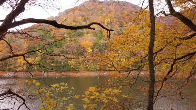 vídeos de stock, filmes e b-roll de cs ws lake and mountain in autumn, shirakami-sanchi, tsugaru quasi-national park, aomori prefecture, japan - shirakami sanchi