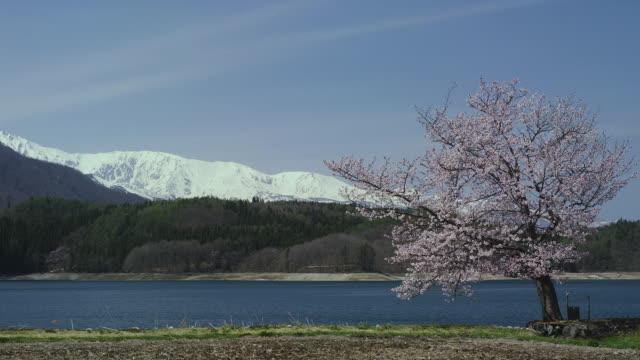 lake aoki and cherry blossoms with hakuba mountain range in background - mountain range点の映像素材/bロール
