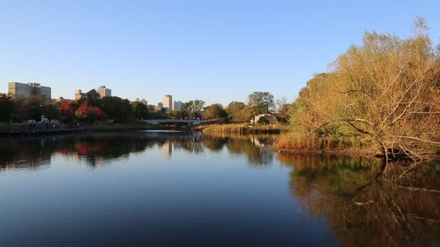 Lake at Lincoln Park Zoo in fall