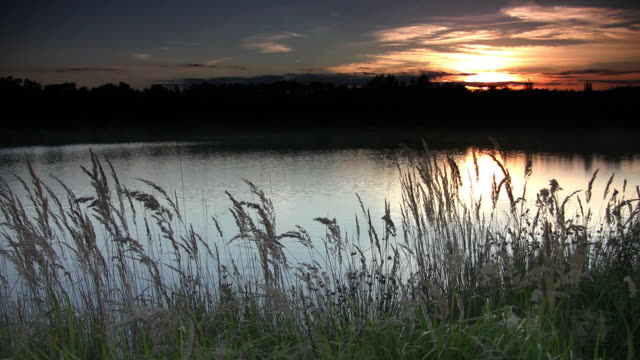 lake at sunset - reed grass family stock videos and b-roll footage