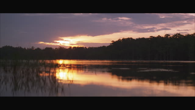 ws lake at sunset - reed grass family stock videos and b-roll footage
