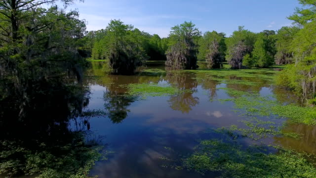 lake blackshear - georgia - spanish moss stock videos & royalty-free footage