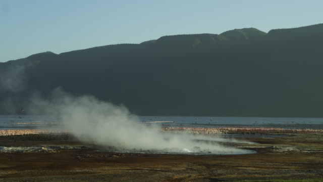 ws lake bogoria with massed flamingo flock and geyser steaming in foreground - geyser stock videos & royalty-free footage