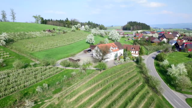 Lake Constance Landscape Aerial View